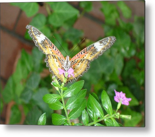 Nature Metal Print featuring the photograph A Moment In Time by Robyn Leakey