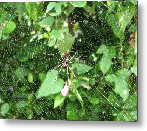 Spider Metal Print featuring the photograph A Spider Web by Stacey May