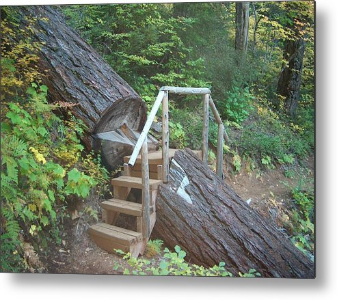 Hiking Trail Bend Oregon Walking Metal Print featuring the photograph Along The Trail by Janet Hall