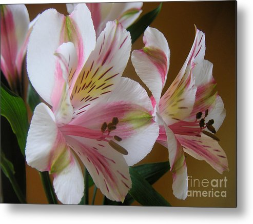 Nature Metal Print featuring the photograph Alstroemerias - Listening by Lucyna A M Green