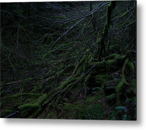 Arnor Metal Print featuring the photograph Arboreal Forest by Jim Thomson
