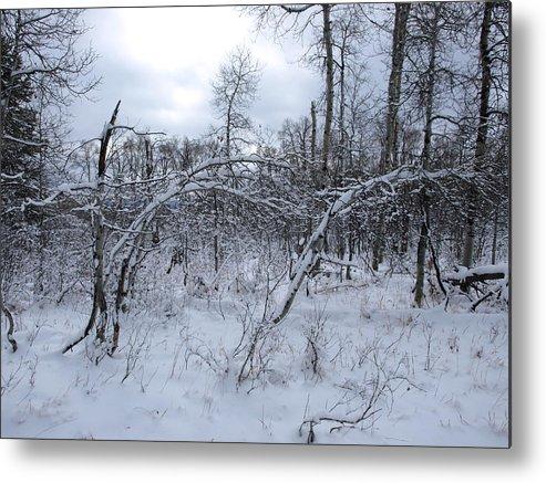 Winter Metal Print featuring the photograph As Winter Returns by DeeLon Merritt