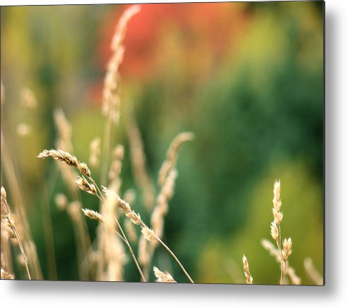 Bokeh Metal Print featuring the photograph Autumn Bokeh by Tingy Wende