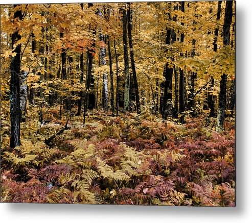 Folioage Metal Print featuring the photograph Autumn Dampness by Tingy Wende