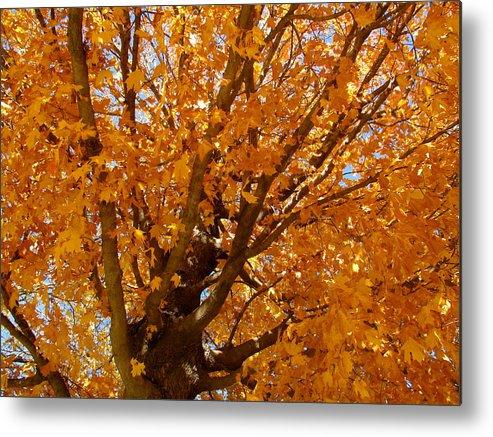 Autumn Metal Print featuring the photograph Autumn Tree by Sherri Williams