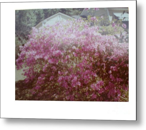 Azalea's Metal Print featuring the photograph Azalea Framed By Roof by Hal Newhouser