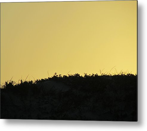 Seagull Metal Print featuring the photograph Basic Sunset by Camera Candy