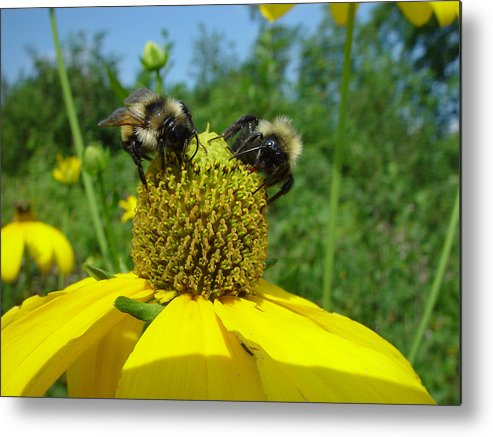 Nature Metal Print featuring the photograph Bees At Work by Eric Workman
