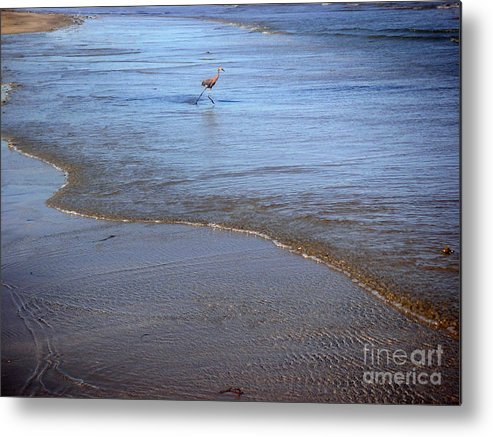 Nature Metal Print featuring the photograph Being One With The Gulf - Playing by Lucyna A M Green