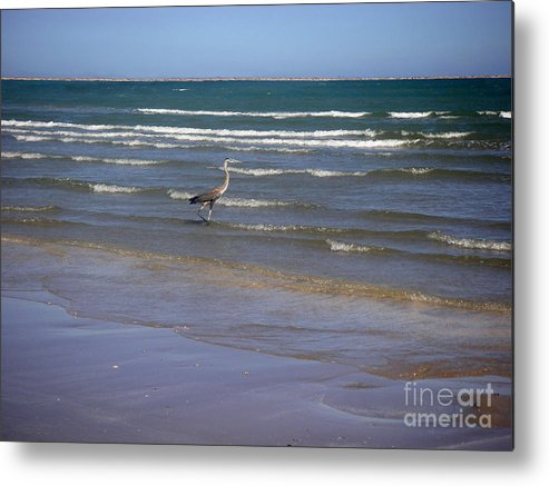 Nature Metal Print featuring the photograph Being One With The Gulf - Wading by Lucyna A M Green