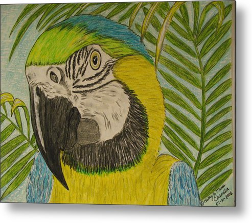 Macaw Metal Print featuring the painting Blue And Gold Macaw Parrot by Kathy Marrs Chandler