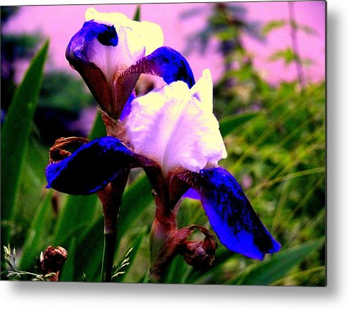 Akeview Metal Print featuring the photograph Blue Flowers by Aron Chervin