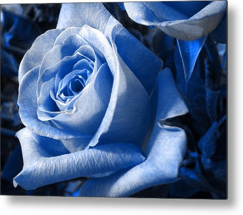 Blue Metal Print featuring the photograph Blue Rose by Shelley Jones