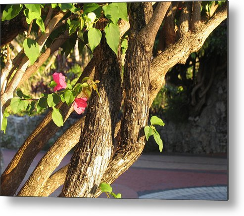Pink Metal Print featuring the photograph Braided by Stephanie Richards