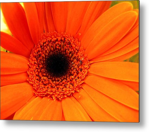 Flower Metal Print featuring the photograph Bright Red by Rhonda Barrett