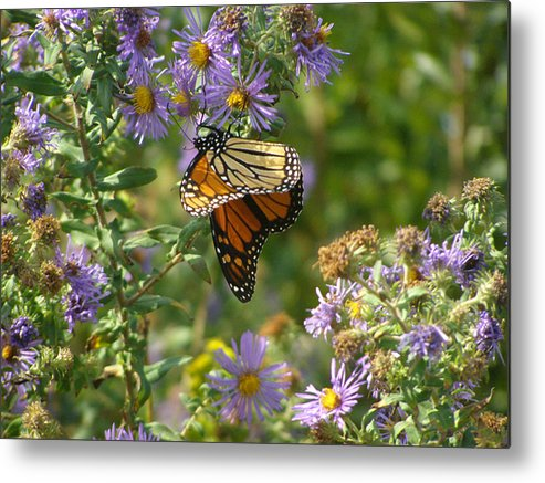 Butterfly Metal Print featuring the photograph Butterfly And Blue by Deborah Dallinga