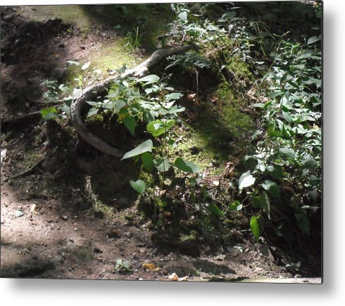 Fairy Metal Print featuring the photograph Candid Fairy by Melissa Dzierlatka