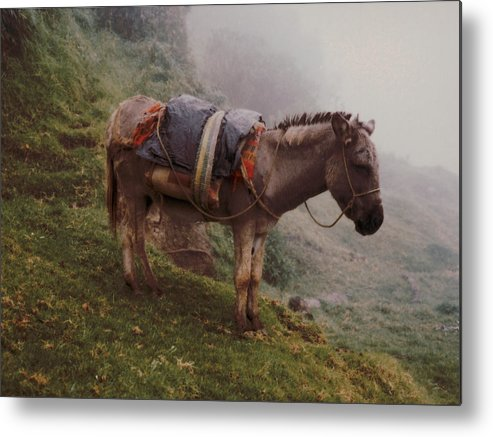 Donkey Metal Print featuring the photograph Colombian Burro In The Fog by Lawrence Costales