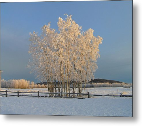 Snow Metal Print featuring the photograph Creamer Field by Louise Magno