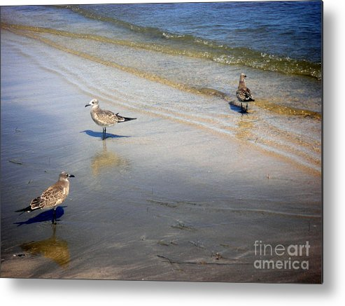 Nature Metal Print featuring the photograph Creatures Of The Gulf - Which Way by Lucyna A M Green