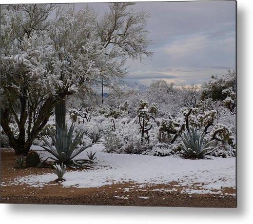 Desert Metal Print featuring the photograph Desert Snow by Regina Arnold