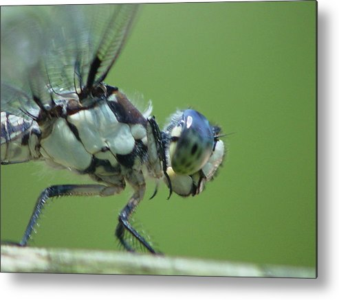 Dragonfly Metal Print featuring the photograph Dragonfly by Tina B Hamilton