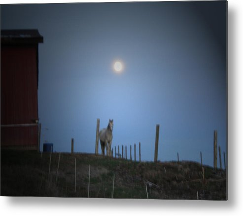 Horse Metal Print featuring the photograph Dusty by Martie DAndrea
