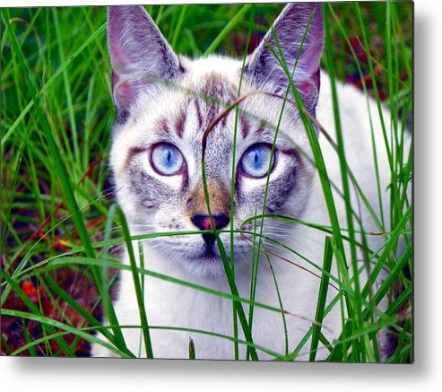 Cats Metal Print featuring the photograph Earl The Grey by Mike Farmer