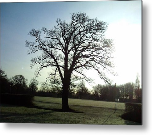 Tree Metal Print featuring the photograph Early Morning Tree In Winter by Ian Andrews