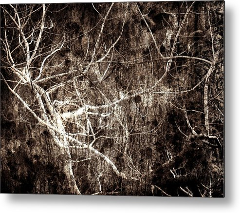 Tree Metal Print featuring the photograph Endless by Gaby Swanson