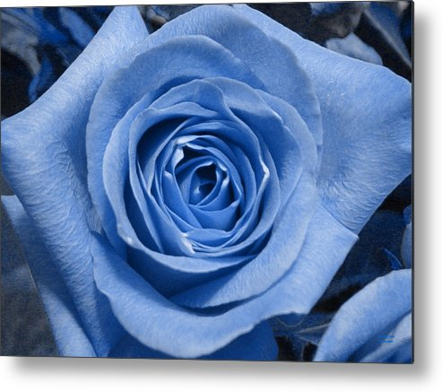 Rose Metal Print featuring the photograph Eye Wide Open by Shelley Jones