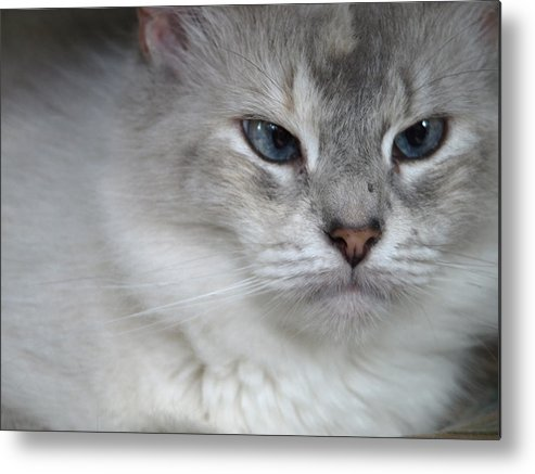 Blue Metal Print featuring the photograph Eyes by Kim