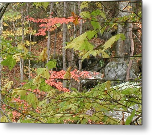 Fall Metal Print featuring the photograph Fall Is Here by Bj Hodges