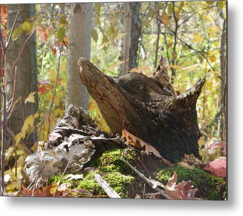 Nature Metal Print featuring the photograph Foxy Stump by Peggy King
