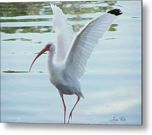 Wings Metal Print featuring the photograph Freedom by Judy Waller