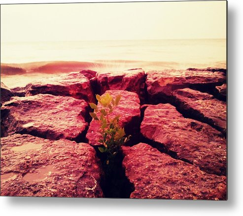 Beach Metal Print featuring the photograph Gift by Zane Chowdhery