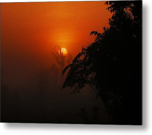 Nature Metal Print featuring the photograph Good Morning Sunshine by Mike Farmer