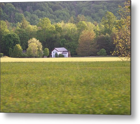 Nature Metal Print featuring the photograph Home by Jessica Burgett