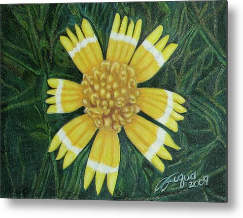 Fuqua - Artwork Metal Print featuring the drawing Huisache Daisy by Beverly Fuqua