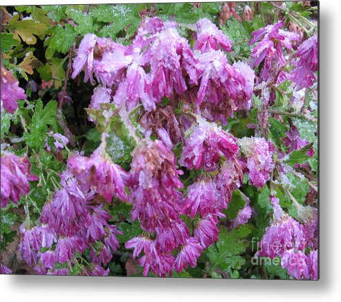 Flowers Metal Print featuring the photograph Ice Covered Flowers by Sherri Williams