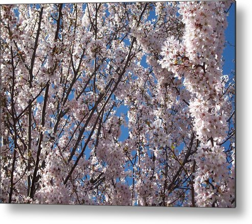 Photo Metal Print featuring the photograph Joy Of Spring by Helene Champaloux-Saraswati