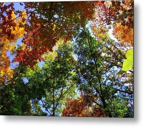 Nature Metal Print featuring the photograph Kaleidoscope by Trudi Southerland