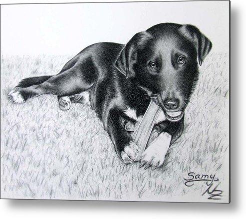 Dog Metal Print featuring the drawing Labrador Samy by Nicole Zeug