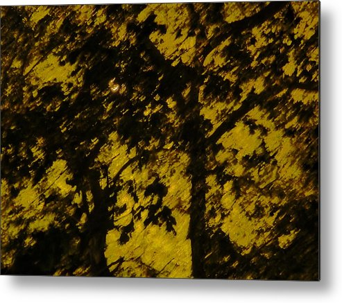 Abstract Metal Print featuring the photograph Lighttthru Forest by Florene Welebny