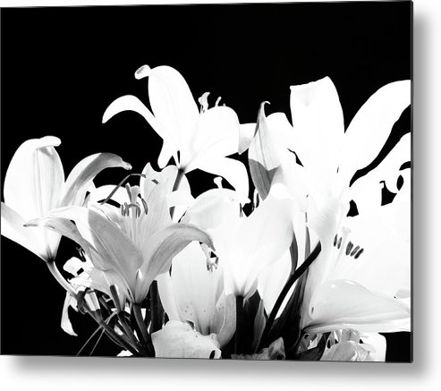 Lilies Metal Print featuring the photograph Lilies In Black And White by Maricela Nunez
