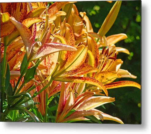 Lilies Metal Print featuring the photograph Lily Flowers Floral Garden Prints Baslee Troutman by Baslee Troutman