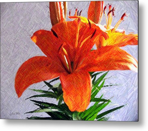 Lily Metal Print featuring the photograph Lily In Color Pencil by Judy Waller