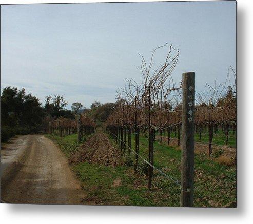 Vineyard Metal Print featuring the photograph Los Olivos Vineyard by PJ Cloud