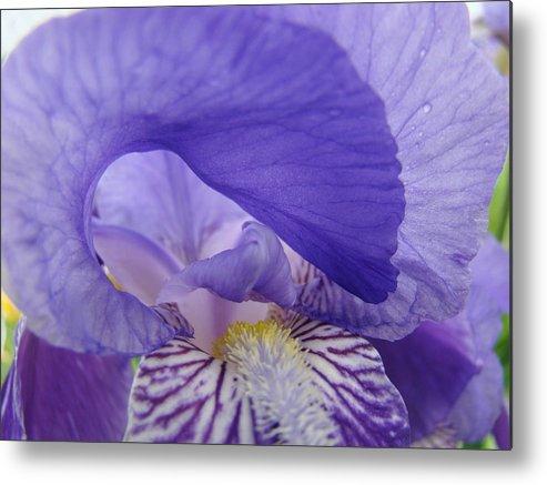 �irises Artwork� Metal Print featuring the photograph Macro Irises Close Up Purple Iris Flowers Giclee Art Prints Baslee Troutman by Baslee Troutman
