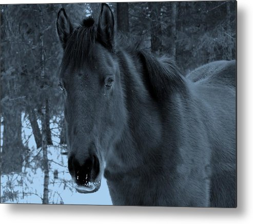 Horse Metal Print featuring the photograph Moonlit Stallion by Tiffany Vest